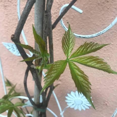 i germogli delle nuove piante che ho messo in vaso