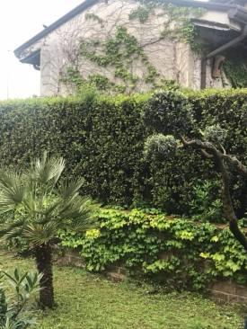 la vecchia pianta che ha abbellito anche il muro del vicino a confine